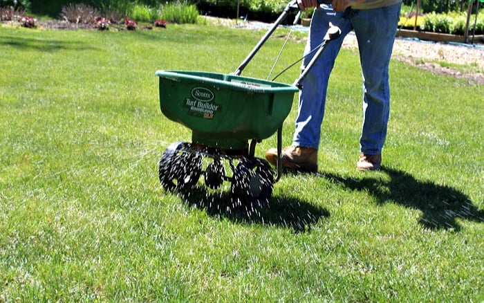green fertilizer spreader with white fertilizer coming out on green lawn.
