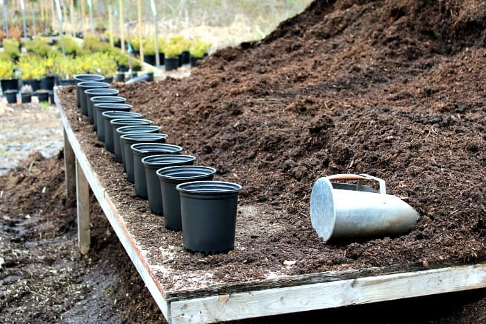 black plastic pots on a wooden table with brown potting mix on the table