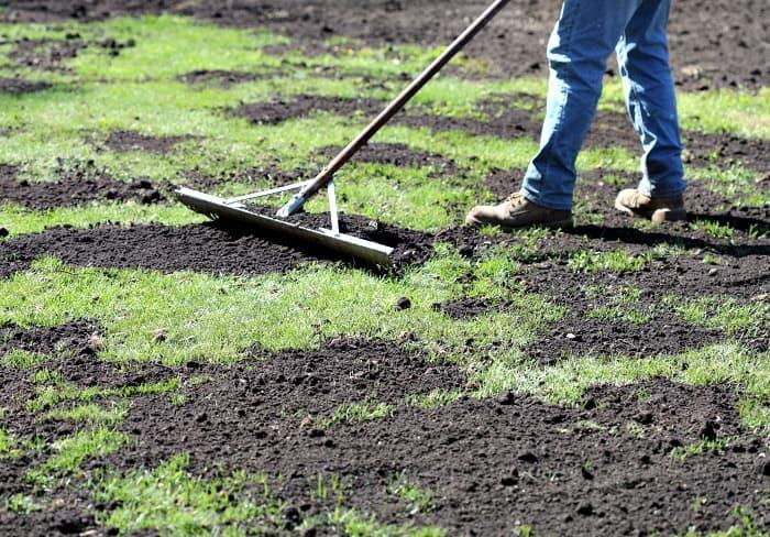 guy using metal landscape rake to rake in compost on green lawn